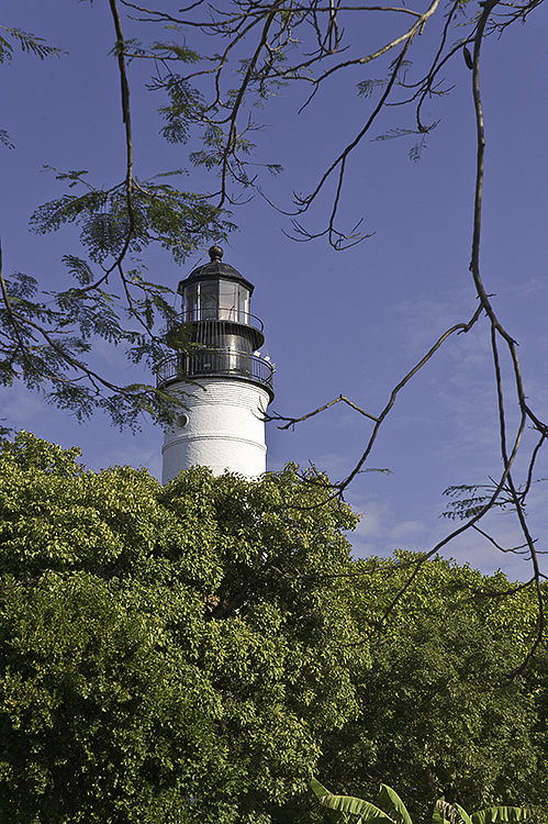 key west lighthouse framed by branches
